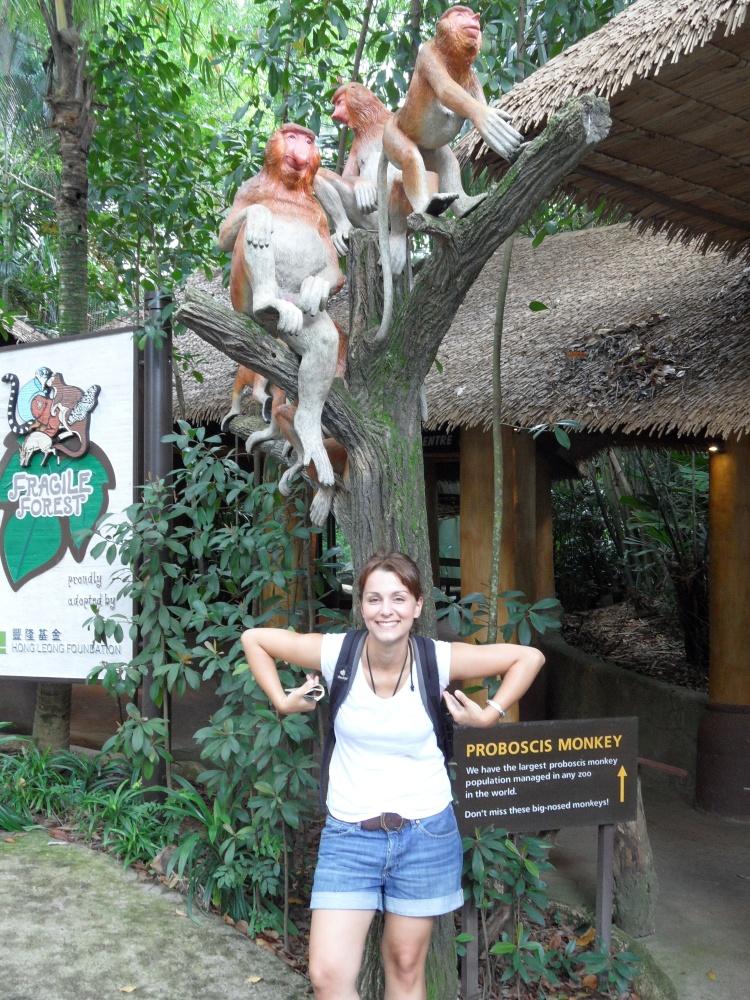 Affen im Zoo von Singapur
