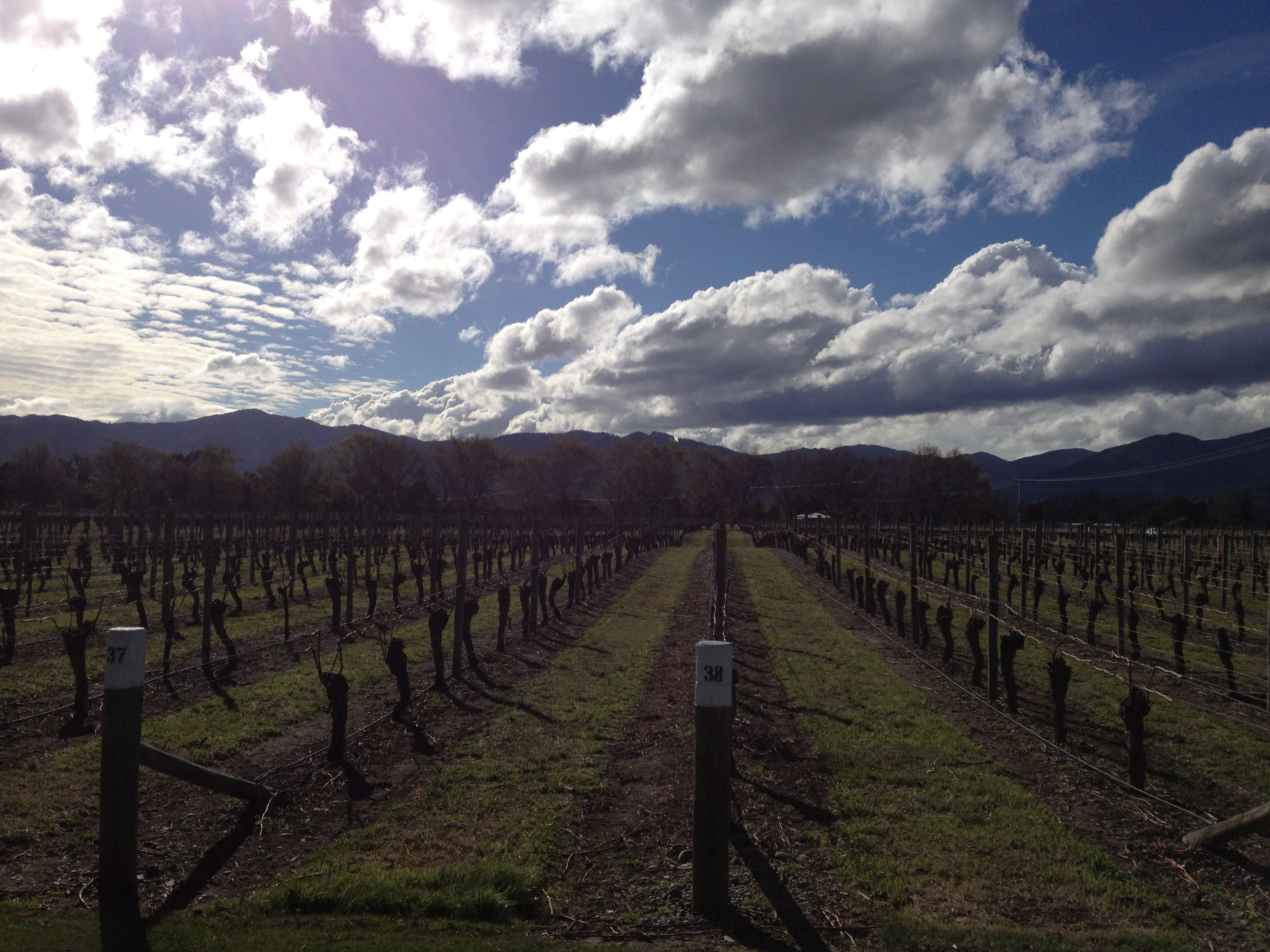 Weinverkostung in der Marlborough Region